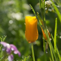 цветы в моем саду.) :: Елена Мартынова