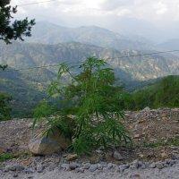 Непал.На горной дороге.Внезапно... :: Михаил Рогожин