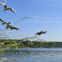 чайки :: Наталья Могильникова