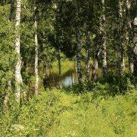 Озеро в лесу. :: Андрей Головин