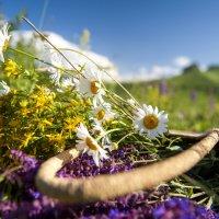 Лето цветет :: Евгений Khripp