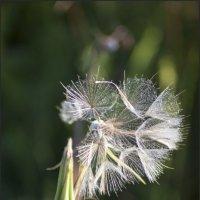 половина красы былой :: liudmila drake