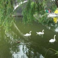 Старый пруд. :: Наталья