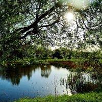 озеро в поселке Кощино Смоленский район :: ирэн
