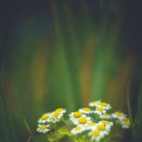 Цветы :: Денис Тарасов