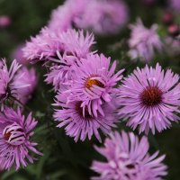 Цветочный хоровод-224. :: Руслан Грицунь