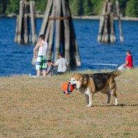 Пес и его оранжевое счастье. :: Тамара Листопад
