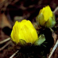 Весна :: Алина Сапарова