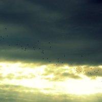 Птичьи дороги :: Катерина Чебышева