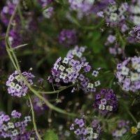 Цветочный хоровод-227. :: Руслан Грицунь