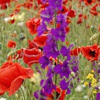 Полевые цветы :: Seva-stopol (Севастьян)