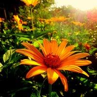 ..  краски лета... :: неля  тулузова