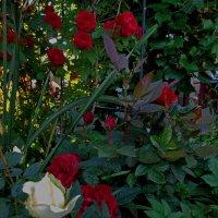 Цветы чужого сада. :: Sergey Serebrykov