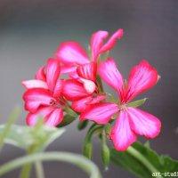 Цветочный хоровод-232. :: Руслан Грицунь