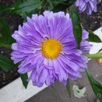 Цветочный хоровод-231. :: Руслан Грицунь