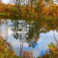 Старый пруд :: Наталья