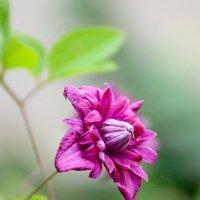 Не много о цветах... :: Михаил Болдырев