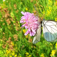 Бабочки :: Лидия (naum.lidiya)