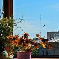 Окно и птицы :: Ирина Сивовол