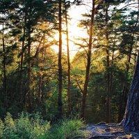 Запылало закатное зарево... :: Лесо-Вед (Баранов)