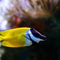 рыбка :: Дина Нестерова