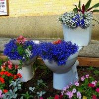 Клумба возле музея туалету :: Ростислав