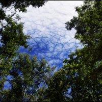 Обнимая небо... :: Alex Sash