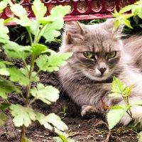 Кошка :: Маша Бачанова