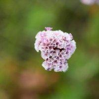 Полевые цветы :: Марина Кириллова