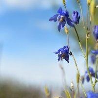 Цветы ! :: юрий Амосов