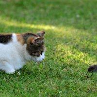 игра в кошки-мышки... :: Андрей Вестмит