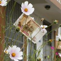 Деньги на цветы :: Валерий