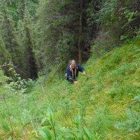 Мы не ищем лёгких путей! :: Андрей Солан