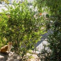 Солнечная кошка :: Тарас Леонидов