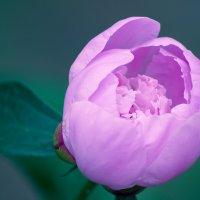 flower_3 :: Trage