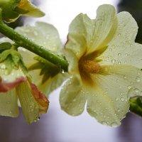 хочется солнца, но опять дождь :: Седа Ковтун