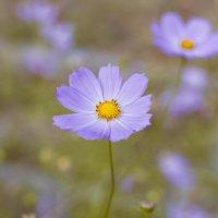 цветы :: Евгений Чега