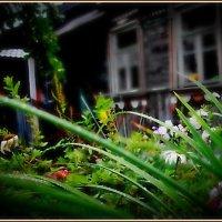 Дом, которого уже нет... :: Григорий Кучушев