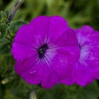 Цветы :: Dzmitry Moisa