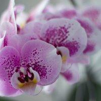 Цветок :: Dzmitry Moisa