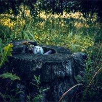 Оторвали ухо......бросили одного в лесу :: АЛЕКСЕЙ ФОТО МАСТЕРСКАЯ