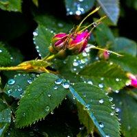 У природы нет плохой погоды... :: Валентин Кузьмин