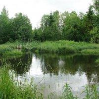 Запруда на реке Парица :: Елена Павлова (Смолова)