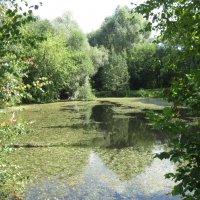 Ботанический сад :: NITALINY WAR