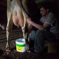 А много ль корова дает молока.... :: Sergey Apinis