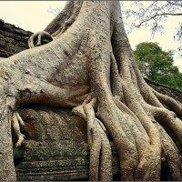 Камбоджа#  Храм Та Пром :: Дмитрий