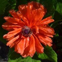 Цветы жизни. :: zoja