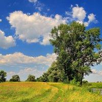 Плывут душою неба облака... :: Лесо-Вед (Баранов)