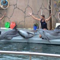 Дельфины и дрессировщики :: Константин Жирнов