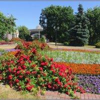 Много,много роз! :: Роланд Дубровский
